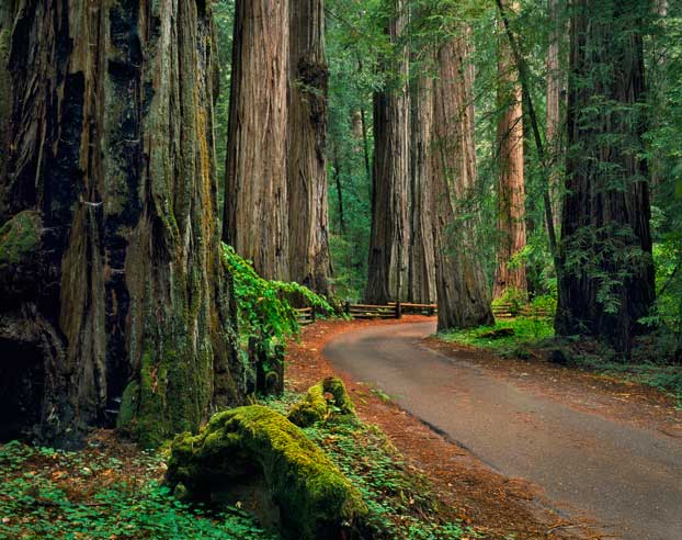 Armstrong-Redwoods-State-Natural-Reserve_image1